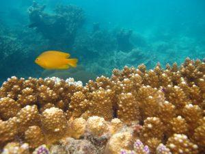 terumbu karang karimunjawa (13)