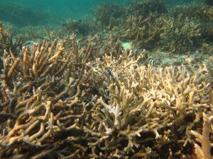 terumbu karang karimunjawa (19)