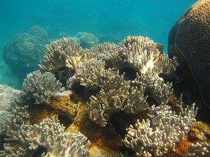 terumbu karang karimunjawa (3)