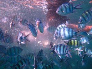 menikmati ikan hias karimunjawa jepara
