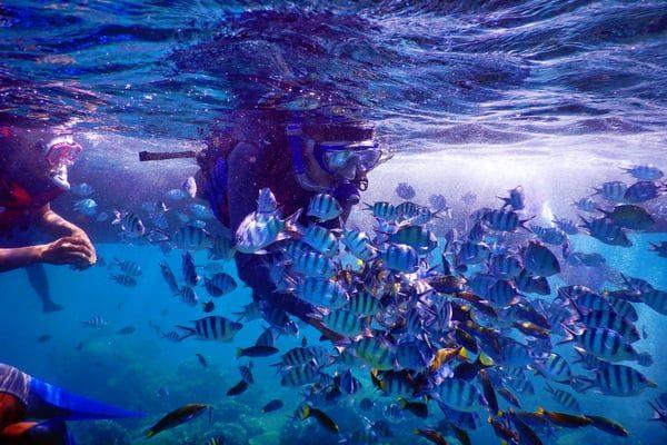 paket wisata karimunjawa homestay 4H3M bahari PP