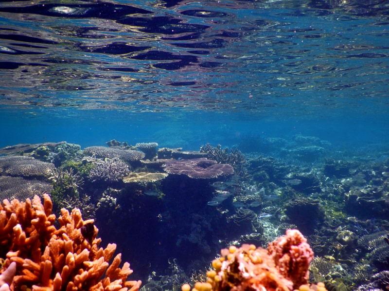 terumbu karang yang indah di p cilik